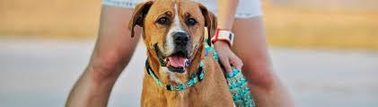 Znalezione obrazy dla zapytania warsaw dog
